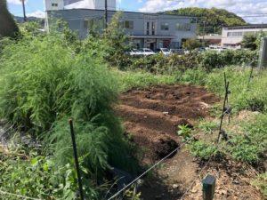 手前のアスパラも急成長!キャベツやブロッコリーは、枝豆やトウモロコシを収穫したスペースを利用する予定です。